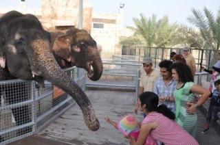 Emirates Park Zoo (Abu Dabi)